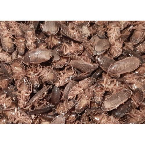 Zamrznjeni ščurki - 0,5 kg