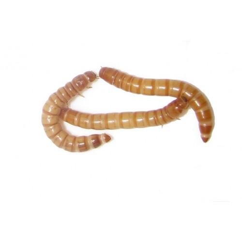 Mokarji - porcija